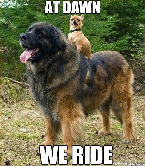 Hey that big one is my type of dog! its called a leonburger