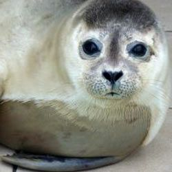 Urge Canadian Prime Minister Stephen Harper to put an end to his country's barbaric seal hunt.