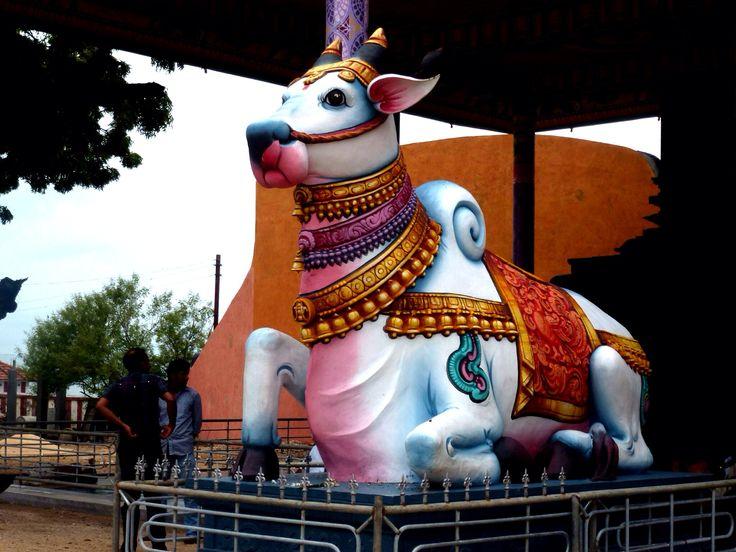 Holy cow! Nagapooshani Amman temple, Sri Lanka