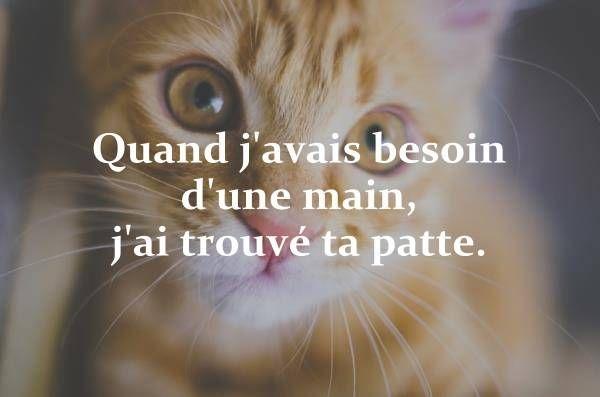 200 Citations Sur Les Chats Qui Vous Feront Rire Sourire Et