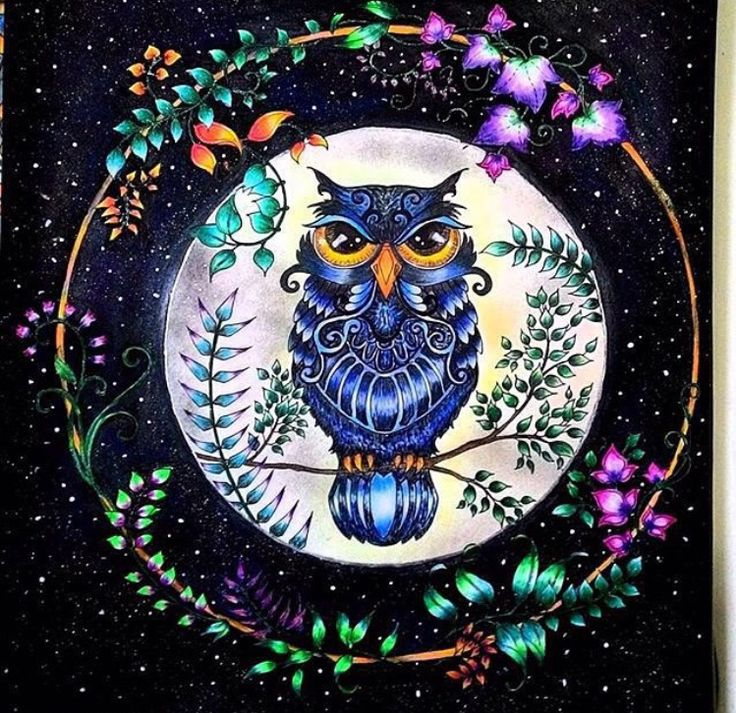 Owl Enchanted Forest Coruja Floresta Encantada Johanna Basford Adult ColoringColoring BooksColouringSecret