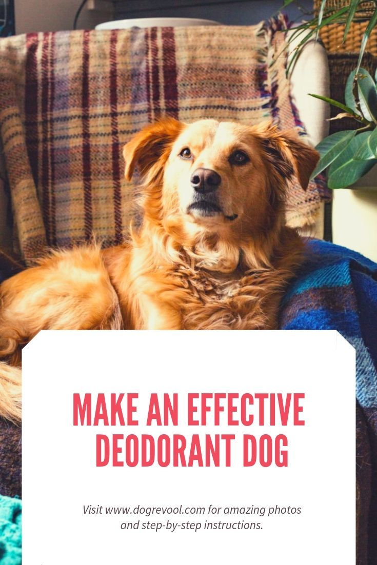 Make an effective deodorant for your dog (With images ...