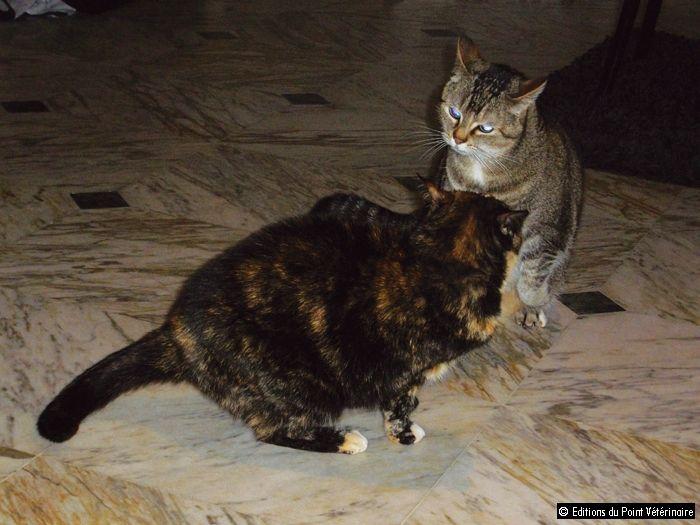 Traitement de la cystite idiopathique - Le Point Vétérinaire n° 331 du 01/12/2012