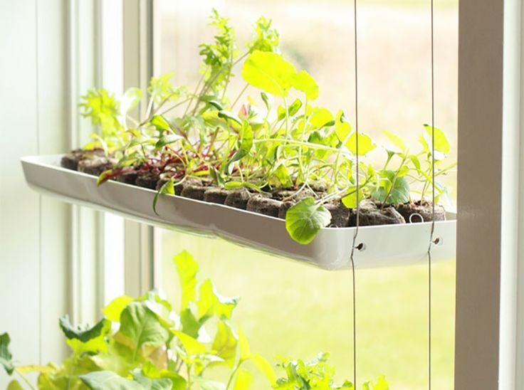 167 best images about indoor gardening on pinterest