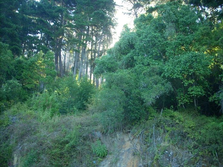 ruta de la madera ,concepcion .