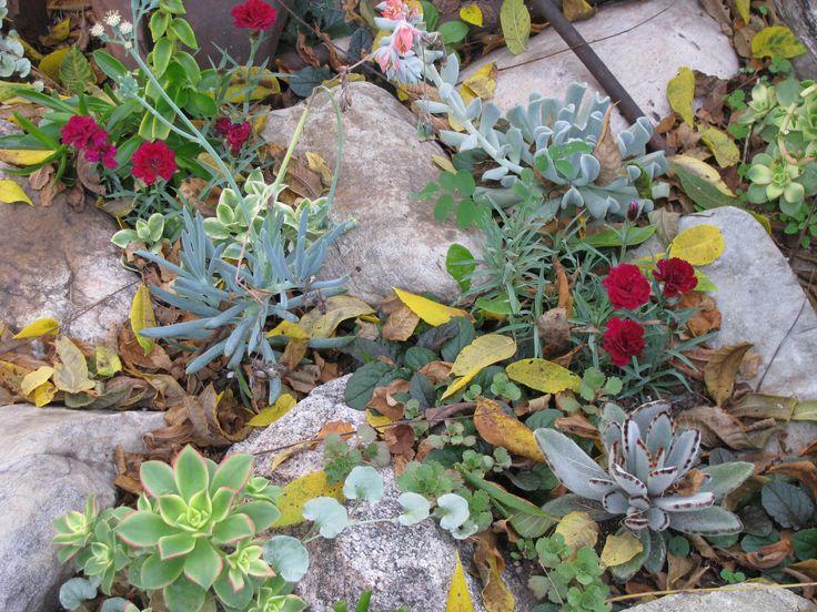 Succulent Rock Garden Garden Ideas Pinterest Gardens