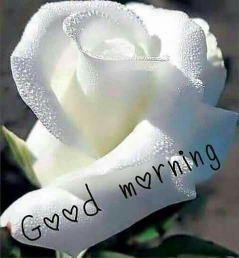 Good morning sister happy Saturday☕