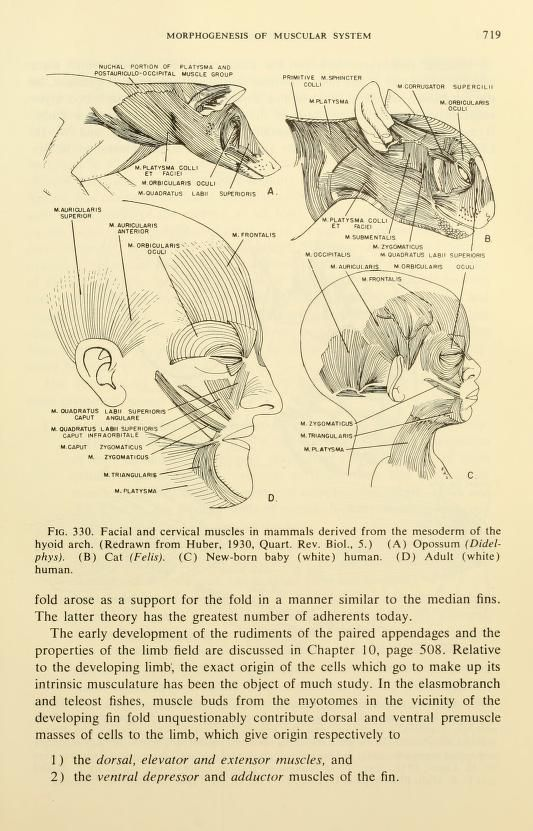 Vertebrate comparative anatomy