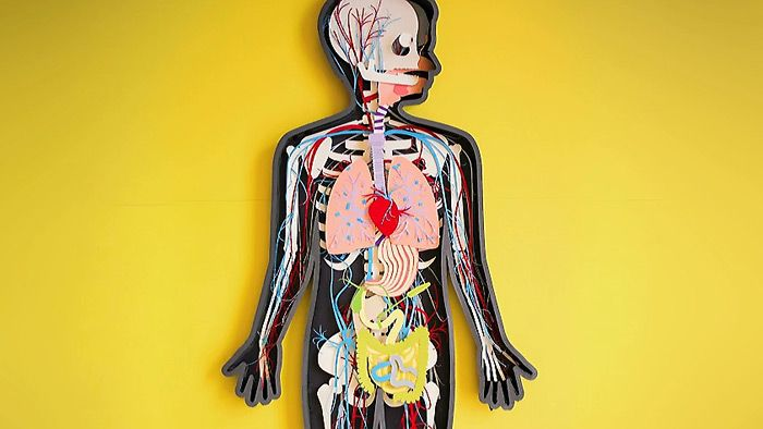 Ľudské telo z papiera. Krátke pekné video.