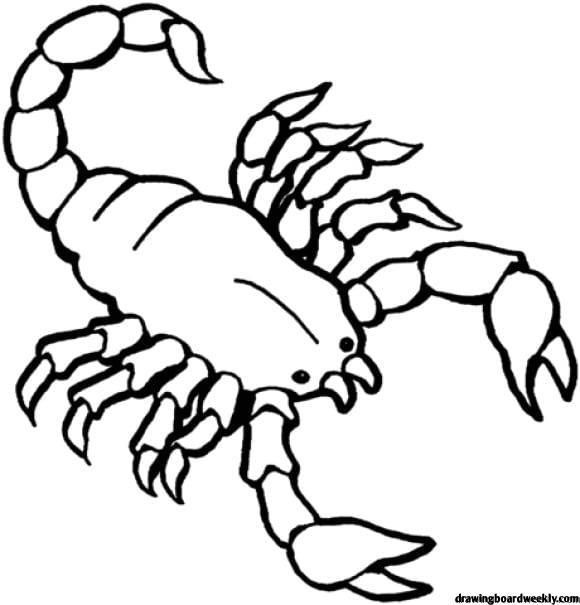 Scorpion Coloring Page Detailed Coloring Pages Coloring Pages Coloring Pictures Of Animals