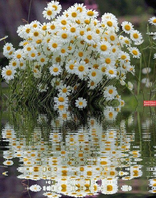 красивые картинки гифки лето ромашки фото выглядит неплохо