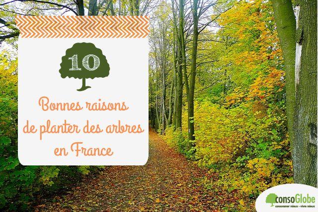 10 bonnes raisons de planter des arbres en France | consoGlobe.com