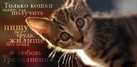 Картинки с мудрыми цитатами (20 фото)
