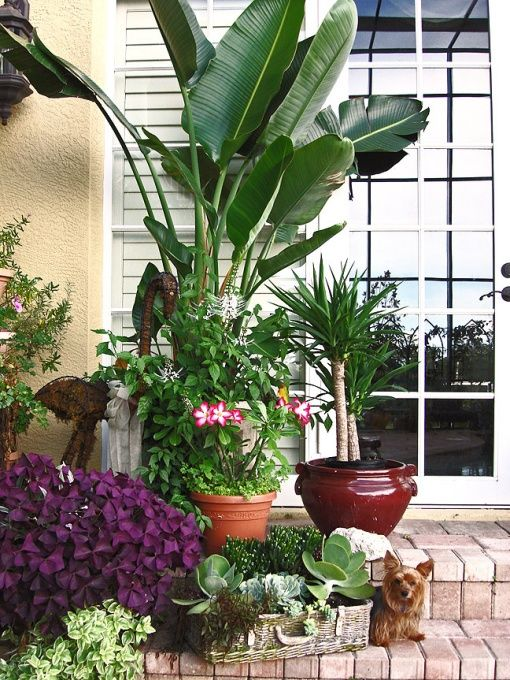 How to Decorate a Lanai | decorating a lanai in florida | KatG's Florida Paradise - 2009, One of ...