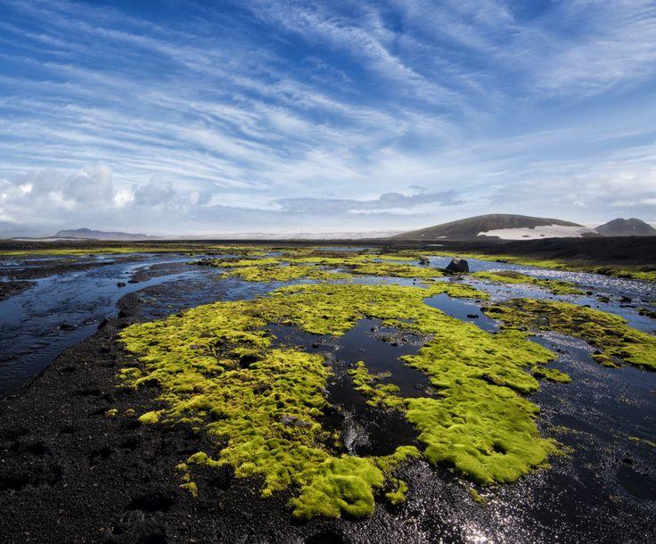 """icelandicphoto: """"Semmi sem lehet látni máshol Izland készíti fel a rideg, sivár, nyers szépsége a meddő felvidék.  Európa utolsó igazi vadon.  Juhok szinte az egyetlen élőlény, amely sikerül túlélni itt, és csak ..."""