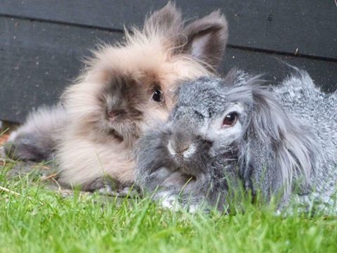 Leah Marie Moore's Leo & Blossom #everybunnyneedssomebunnytolove
