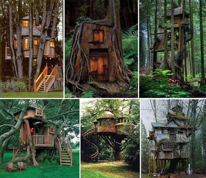 Dream treehouses.
