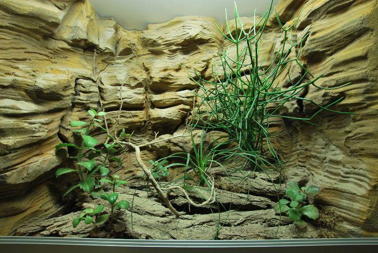 227 best images about bearded dragon terrarium on pinterest iguana cage project r and snake cages - Decor fond terrarium desertique ...