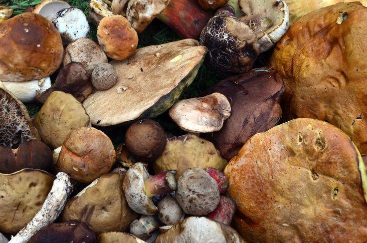 В Турции апельсины, а в Грузии грибы. Очень много грибов. В этот раз просто по тропинке возвращаясь от Ушбинского ледника мы с группой набрали 5 кг белых, польских и подосиновиков. Сыроежки, рыжики, лисички и другие грибы было принято мужественное решение не собирать, так как ничего толкового с ними сделать не сможем. Но ооочень хотелось! Почему-то у сванов не принято собирать грибы, рыбачить и собирать ягоду. Иногда у них присутствуют блюда с этими ингридиентами, но крайне редко, хотя край…