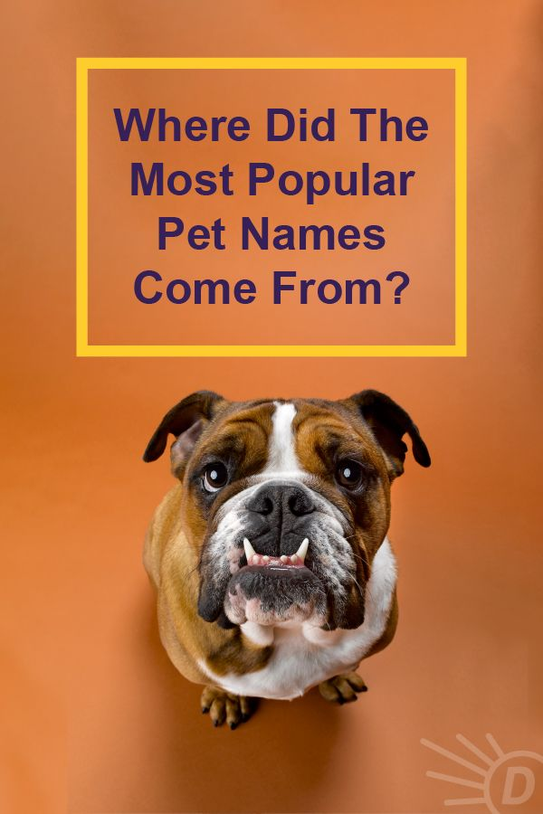 Where Did The World S Most Popular Pet Names Come From In 2020