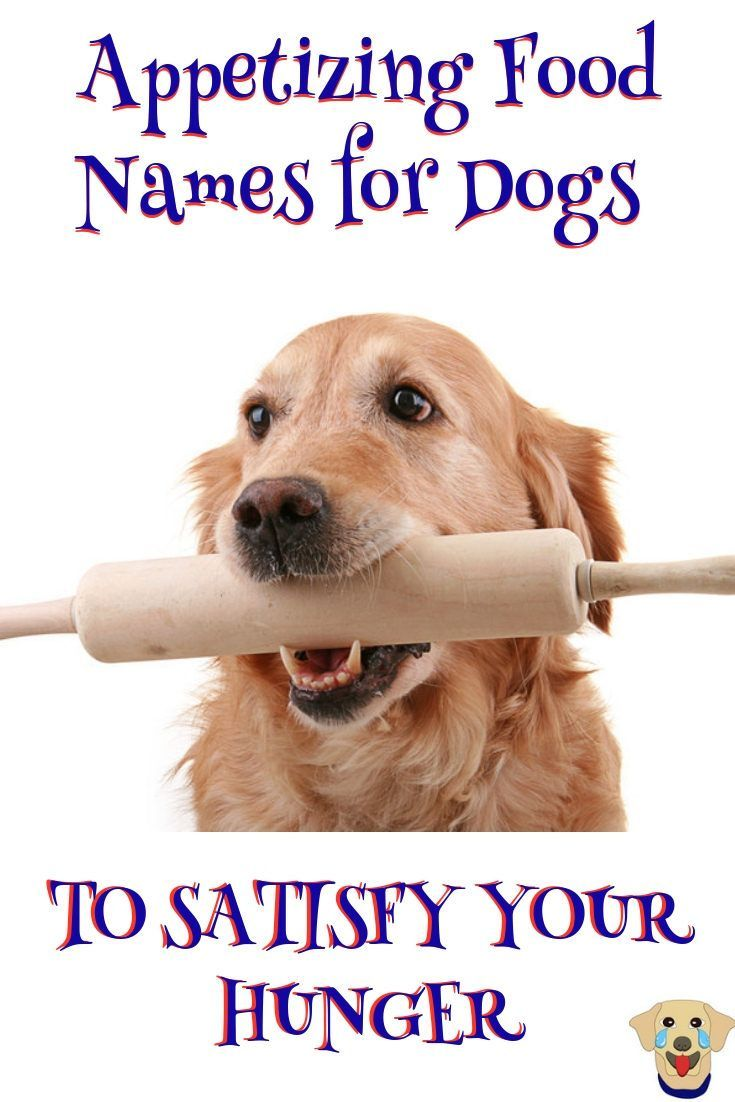 Appetizing Food Names For Dogs To Satisfy Your Hunger Dog Names
