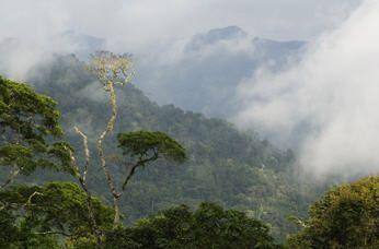 cerro tacarcuna | Panama National Park | Darien National Park #Unesco world…