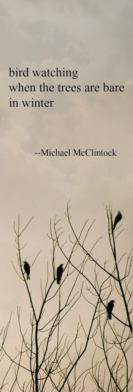 Haiku poem: bird watching -- by Michael McClintock.