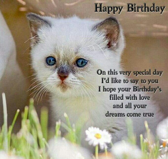 Happy Birthday Cat Wishes: 420 Best Images About Happy Birthday On Pinterest