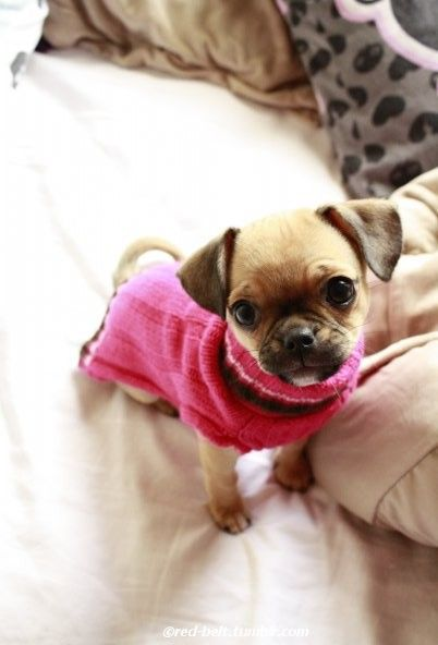 A chug!!!  I LOVE THIS!!!!! Shhh! Don't tell Kevin, but Eva might get a sweater like this ;-)