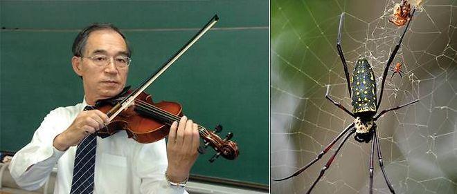 Le chercheur japonais Shigeyoshi Osaki expérimente ses cordes de violon en soie d'araignée.