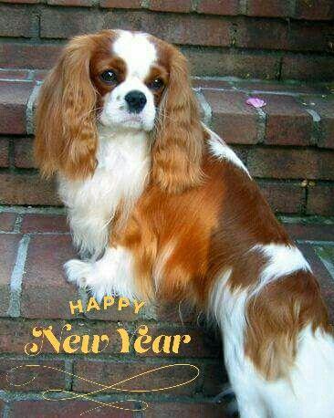 A Cavalier Happy New Year!