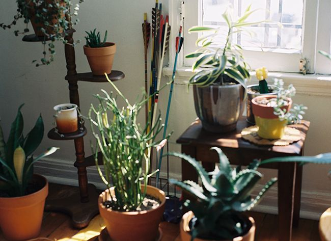 65 Best Images About House Plant Display On Pinterest