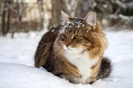 Pet Sitting: Το κρύο και τα λάθη για να τα αποφύγετε για την γα...
