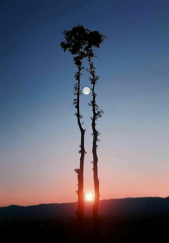 Masood Anwar A German photograher had fixed 16 cameras to get this shot for which he had to wait for 62 days. See the moon and … | Photos (interesting) in 2018…