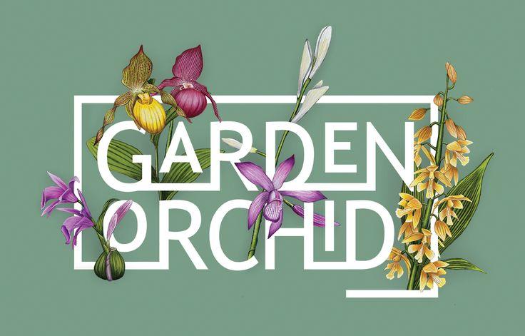 Love the spring season. Enjoy Garden Orchid in your garden. #garden
