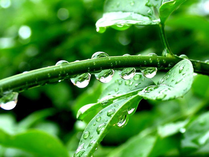 Drops On Leaf Nature Wallpaper