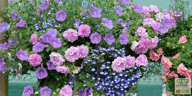 Les 52 meilleures images propos de pot es fleuries sur for Plante fleurie jardin