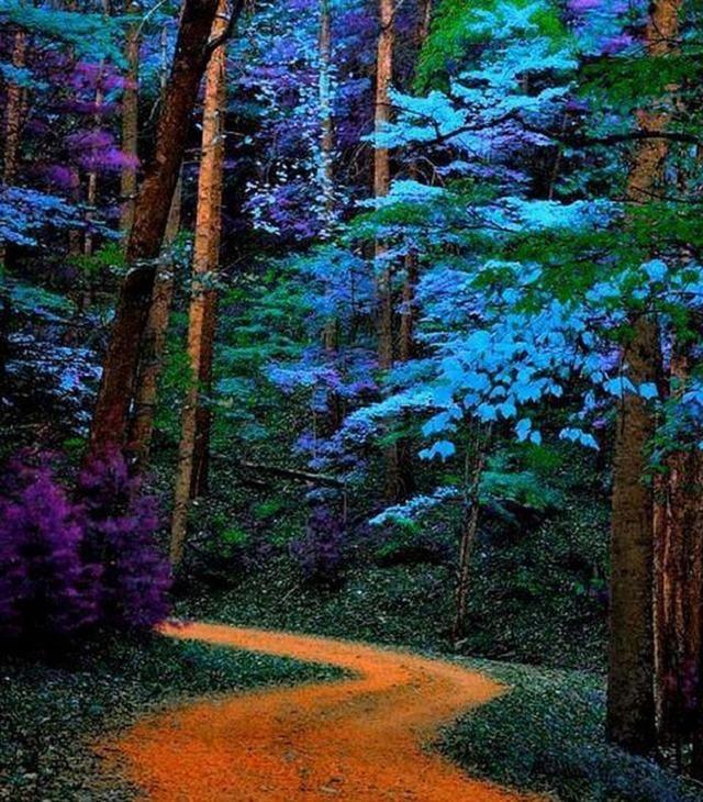 Os impressionantes tons roxos e azuis dessas plantas são um colírio para todos os visitantes das Great Smoky Mountains, montanhas localizadas nos estados da Carolina do Norte e Tennessee, Estados Unidos.