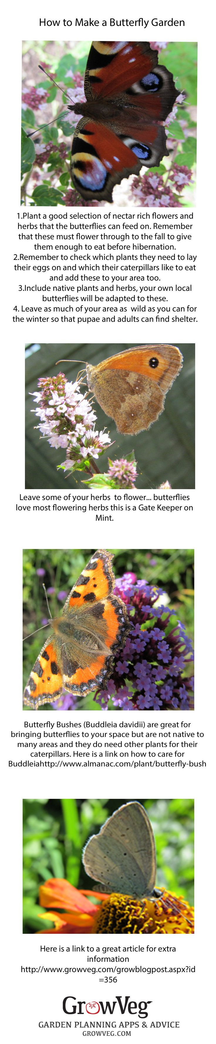 Butterfly Garden Ideas 5 climbing plants for vertical butterfly gardens How To Plant A Butterfly Garden