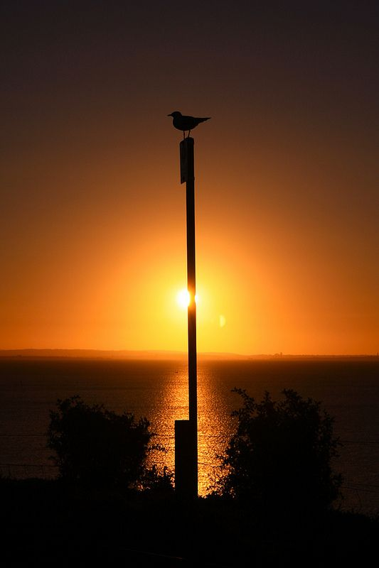 Clifton Springs Sunset   by halloosin8 on Flickr. Clifton Springs is a coastal town located on the Bellarine Peninsula, near Geelong, Victoria, Australia, named after local mineral springs, which were found around Fairy Dell
