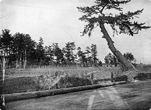 No.39 東海道五十三次之内 池鯉鮒 首夏馬市   知足美術館