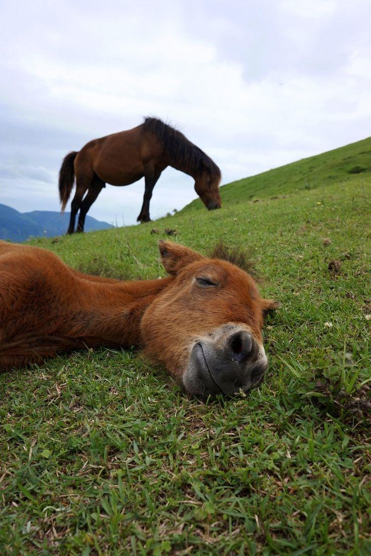 都井岬の野生馬 : kazuの視点