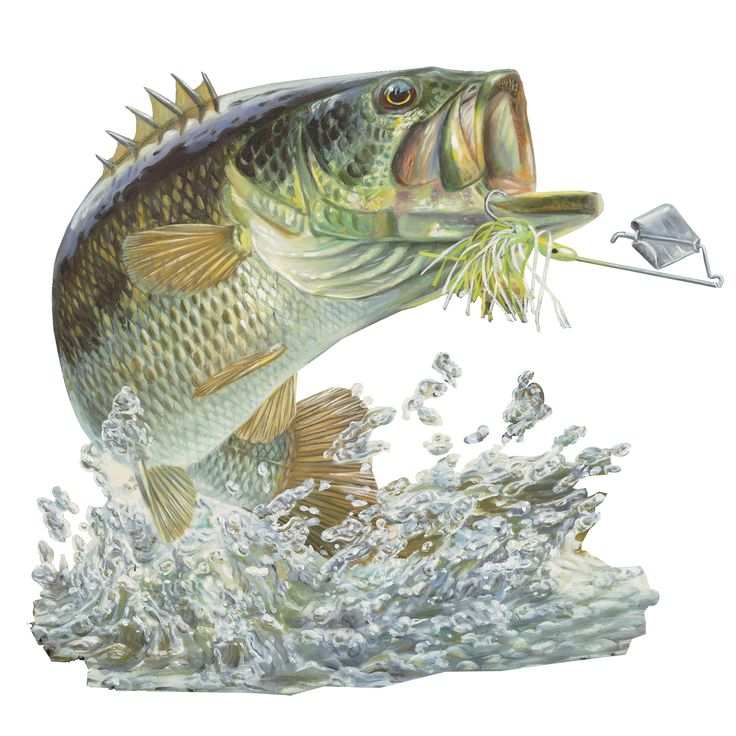 Skiff Life welcomes Talented Artist Randy McGovern to our Fish Family. Skiff Life now offering Randy McGovern fishing apparel, fishing hats and fish decals. Our latest arrival to our Fish Family the B