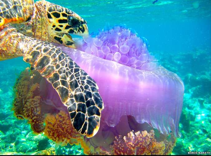 Increíbles fotos de la Sociedad de Biología de Reino Unido - Terra Argentina