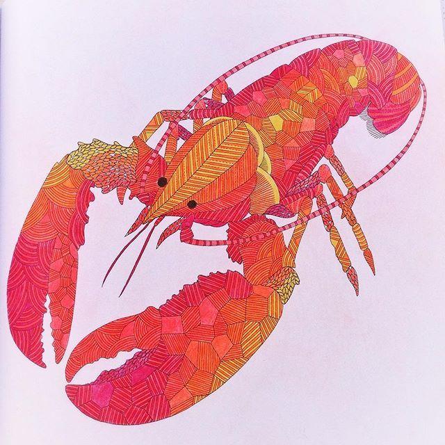 Lobster O Milliemarotta Milliemarottabooks Milliemarottaanimalkingdom Colouring Adultcoloringbook