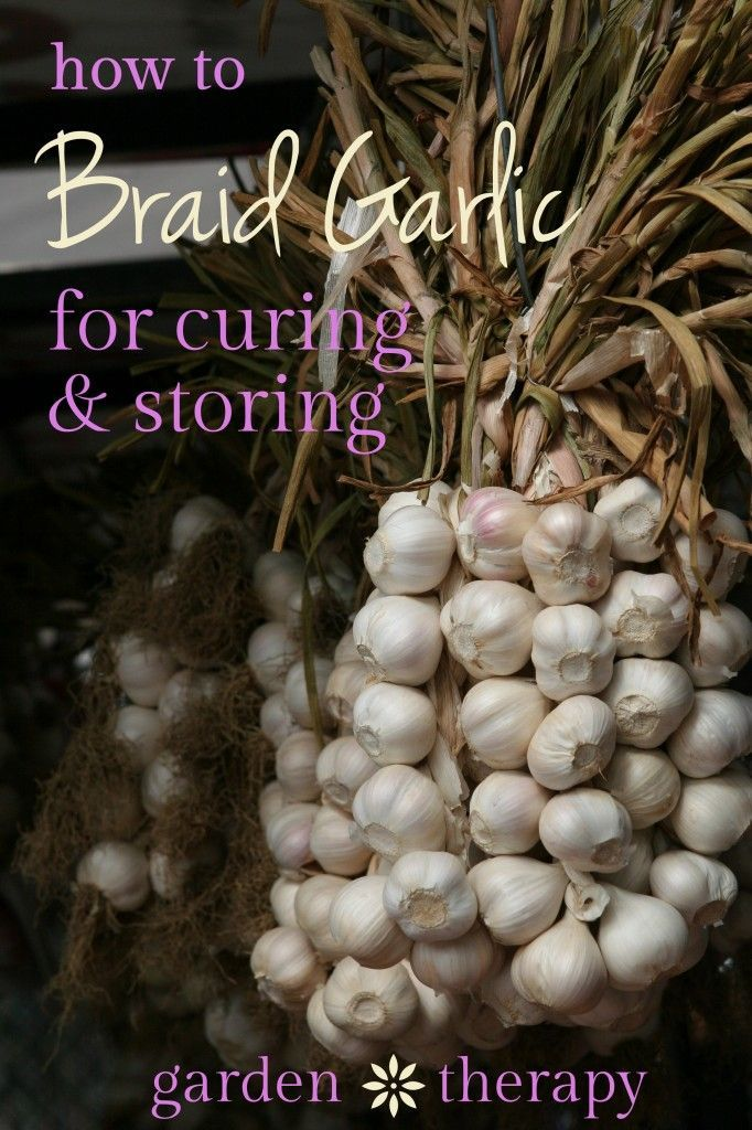 Picturesque  Best Images About Garden Root Veggies  On Pinterest  With Marvelous How To Braid Garlic With Comely Woodlands Garden Centre Leicestershire Also Coloured Garden Stones In Addition Gardens Galore And Bruce Springsteen Secret Garden As Well As Future Garden Additionally Argos Garden Tools From Pinterestcom With   Marvelous  Best Images About Garden Root Veggies  On Pinterest  With Comely How To Braid Garlic And Picturesque Woodlands Garden Centre Leicestershire Also Coloured Garden Stones In Addition Gardens Galore From Pinterestcom