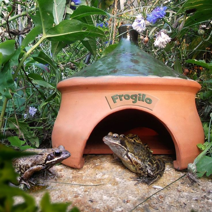RSPB: Frogilo frog house | If you don't have the time - or maybe the inclination - to build one yourself.