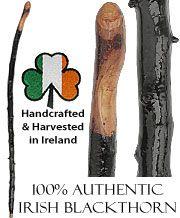 Irish Blackthorn Walking Sticks - Shillelagh Walking Sticks   FashionableCanes.com