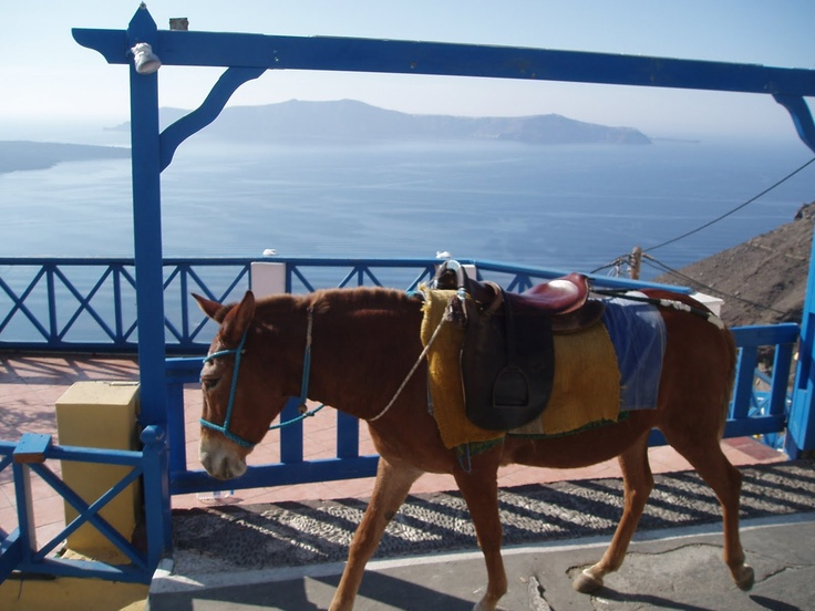 Mule ride up the Caldera: Things to do, Santorini