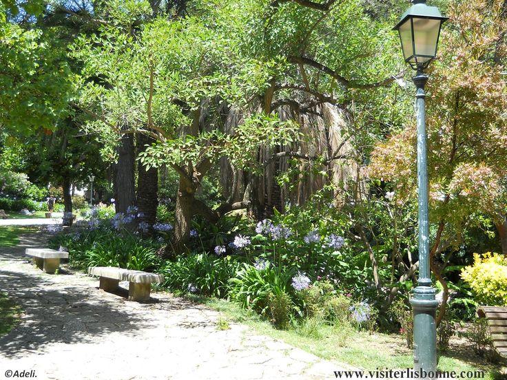 Jardim da estrela - Lisbonne